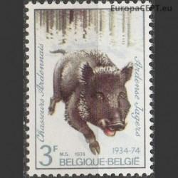 Belgija 1974. Medžioklė
