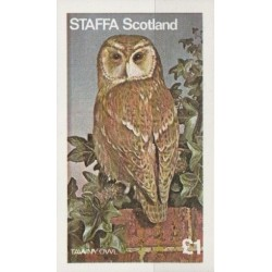 Škotija 1977. Pelėda