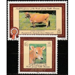 Jersey 1979. Cows
