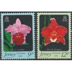 Džersis 1984. Orchidėjos
