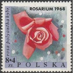 Poland 1968. Roses