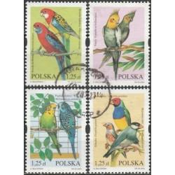 Poland 2004. Parrots