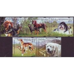 Lenkija 2006. Šunys