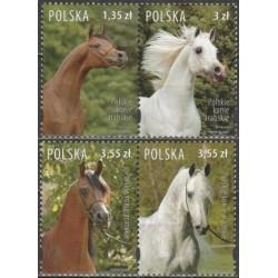 Poland 2007. Arabian horses