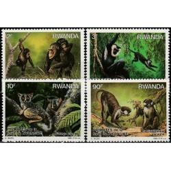 Rwanda 1988. Monkeys