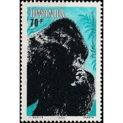 Rwanda 1983. Mountain gorilla