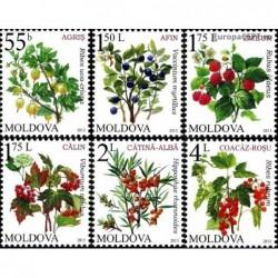 Moldova 2013. Berries