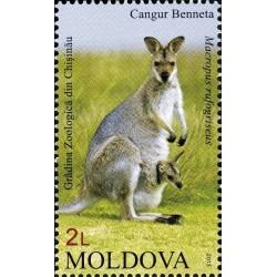 Moldova 2013. Kangaroo