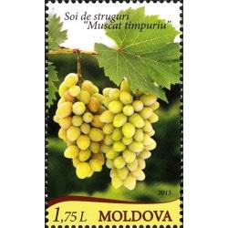Moldova 2013. Grapes Muscat...