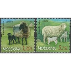 Moldova 2014. Lambs