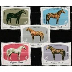Hungary 1985. Horses