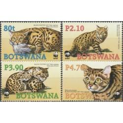Botswana 2005. Black-footed...