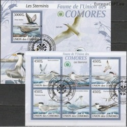 Comoros 2009. Terns