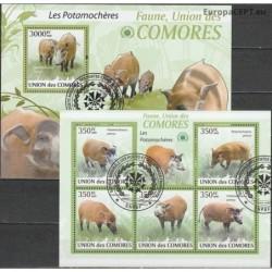 Comoros 2009. Bushpigs