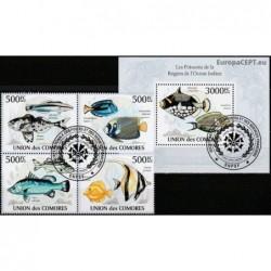 Comoros 2010. Fishes