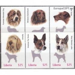 Liberia 1999. Dogs
