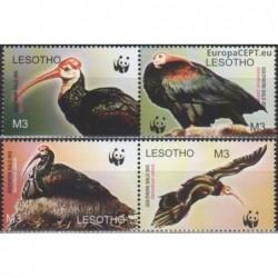 Lesotho 2004. Southern bald...