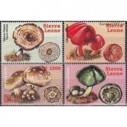 Sierra Leone 2000. Mushrooms