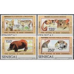 Senegal 1987. Animals of...