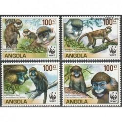 Angola 2011. Beždžionės...