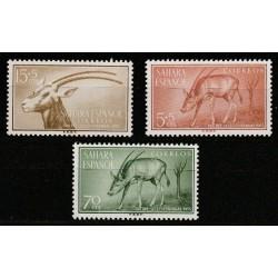 Spanish Sahara 1955. Antelope