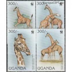 Uganda 1997. Giraffe