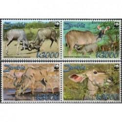 Zambia 2008. Greater kudu