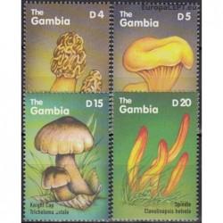 Gambija 2000. Grybai