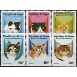 Guinea 1998. Cats