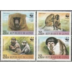 Guinea 2000. Monkeys