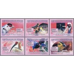 Gvinėja 2008. Paukščiai