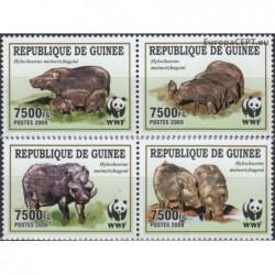 Guinea 2009. WWF Wild Boar