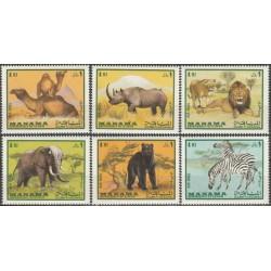 Manama 1969. Žinduoliai